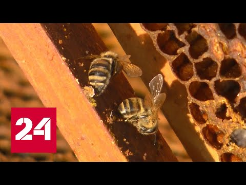 Вопрос: С чем связана масштабная гибель пчёл в 2020 году на юге России?
