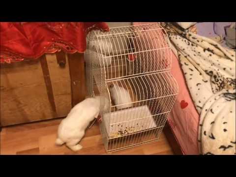 Декоративные кролики на свободе. Содержание и разведение кроликов. Веселые кролики. Дачная Жизнь ТВ.