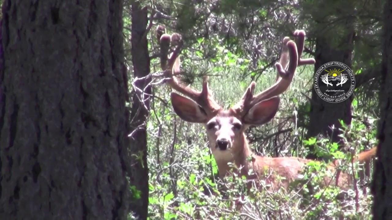 Arizona strip deer hunts — 11