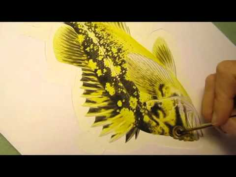 Black-and-Yellow Rockfish by Val Kells