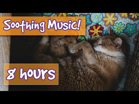 Music For Cats - FREE calming music, soothing sounds designed to help cats on anxiety and behaviour