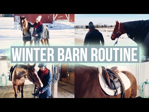 Winter Barn Routine feat. Equilab | Equestrian Prep