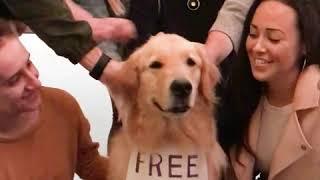 Free Hugs  Golden Retriever