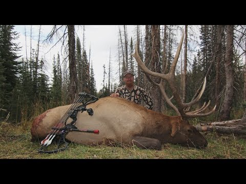 300 INCH 5 POINT KILLED WITH A BOW!!! COLORADO BACKCOUNTRY ELK HUNT - DAY 10