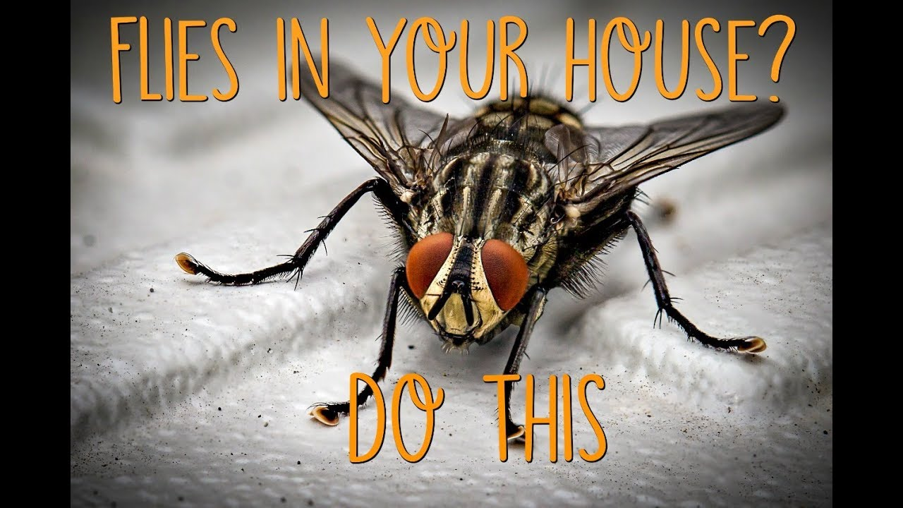 Why are there Flies in my House all of a Sudden? - Crafty