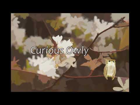 Curious Owly