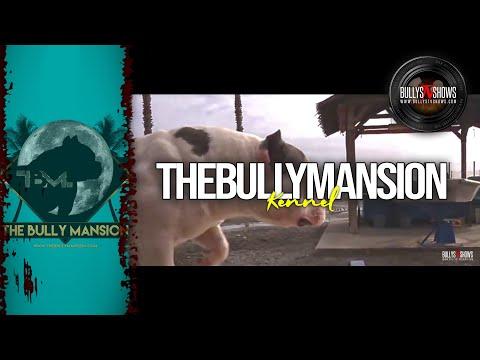 The Bully Mansion (Málaga, Spain)