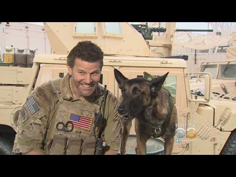 David Boreanaz's Canine Sidekick Becoming MustSee On 'SEAL Team'