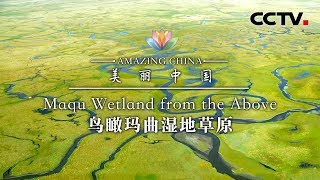 《美丽中国》 鸟瞰玛曲湿地草原 | CCTV