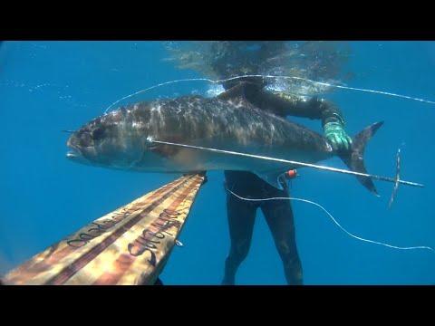 "Pesca Sub: ""Predator"""