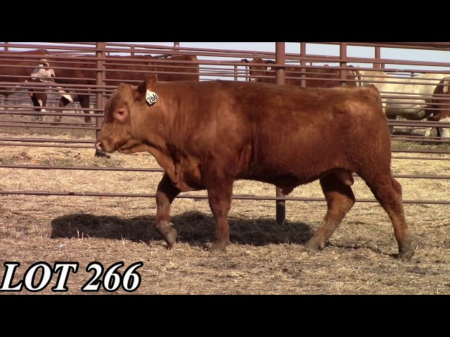 Mead Angus Farms Lot 266