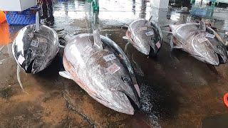 Amazing fish cutting skİlls - How to cut a giant bluefin tuna for Sashimi
