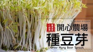 療癒~豆芽成長日記,所有細節一次告訴你! 孵豆芽/ 種豆芽/ 發綠豆芽 Grow Mung Bean Sprouts [Eng Sub]