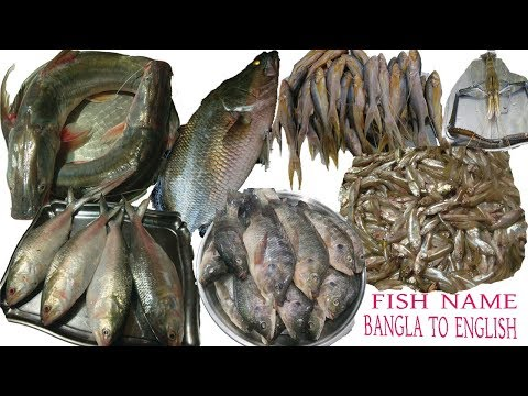 Bangladeshi Fish Name Learning.