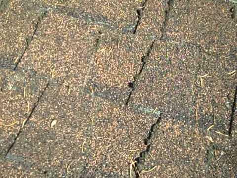 Moss Destroying Roof Shingles Youtube