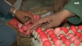 مسابقة البيض .. لعبة تراثية في مدينة بيشاور