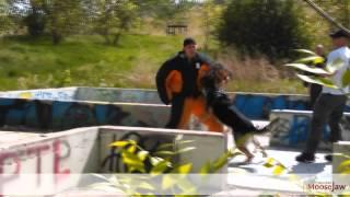 Moose Jaw Police Canine Unit Training June 4, 2015