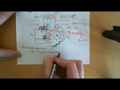 G-protein-couped receptors Part 5