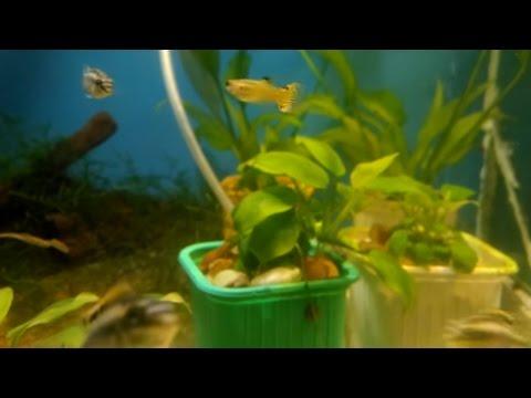 Аквариум для начинающих Все про Анубиас Нана Anubias Nana Aquarium for beginners All about Anubias
