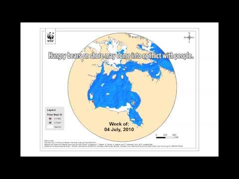 Six years of polar bears and sea ice on Hudson Bay