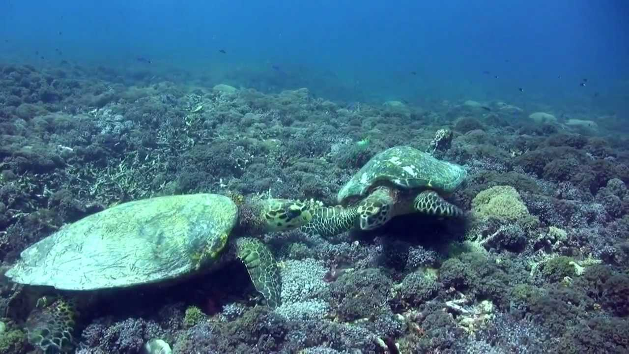 Dsm dive plong e lombok diving lombok gili general environment youtube - Lombok dive resort ...