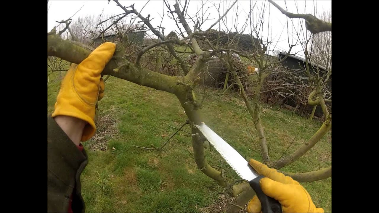 pruning an apple tree that made too much whippy growth last year youtube. Black Bedroom Furniture Sets. Home Design Ideas