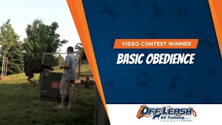 Video Contest Winners: Basic Obedience! Dog Training, Northern Va, Nj, Pa, Nc