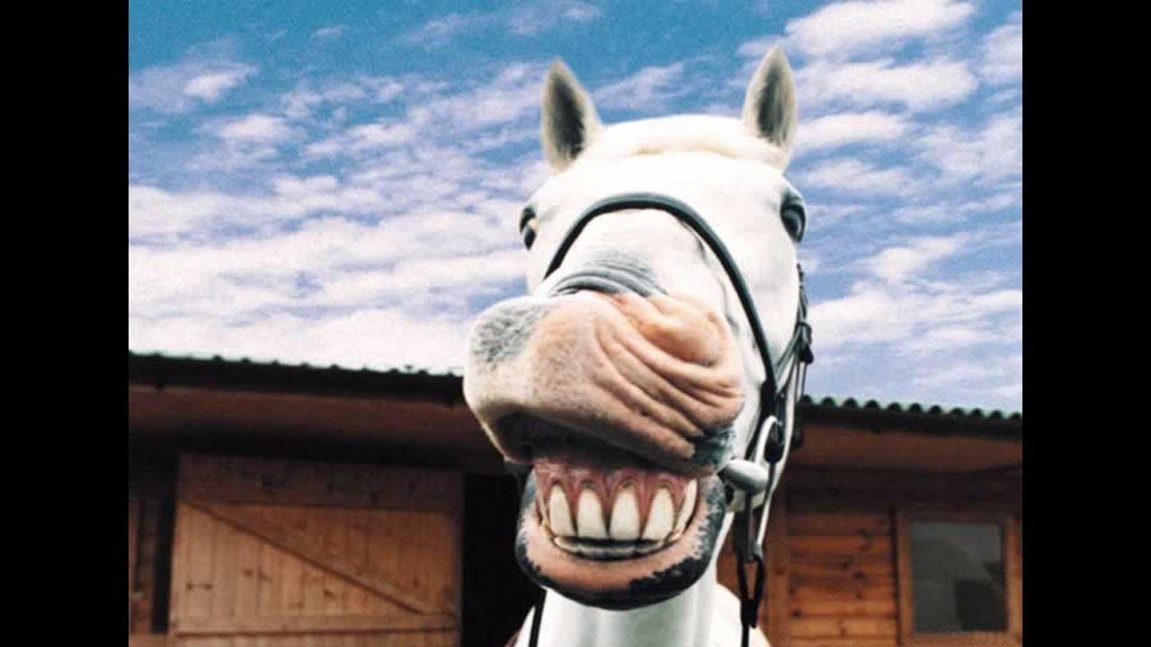 Funny horse dance - YouTube