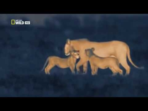 Africa at Night Time (Nightvision Cameras) | Animals & Nature Documentary | National Geographic