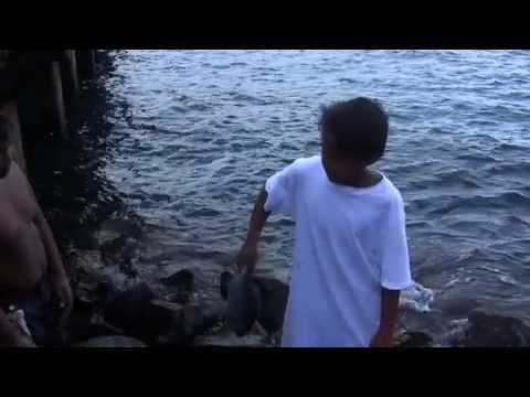 PBS Hawaii - HIKI NŌ Episode 407 | Hosted by Ke Kula Niihau O Kekaha Learning Center | Full Program