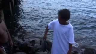 PBS Hawaii - HIKI NO: Ke Kula Niihau O Kekaha