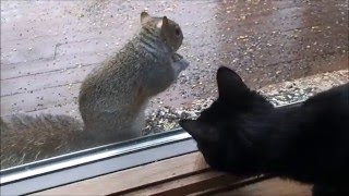 Squirrel Vision For Cats And Kittens