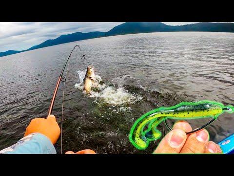 Barramundi Fishing, Topwater Frog Fishing Tackle And Tips