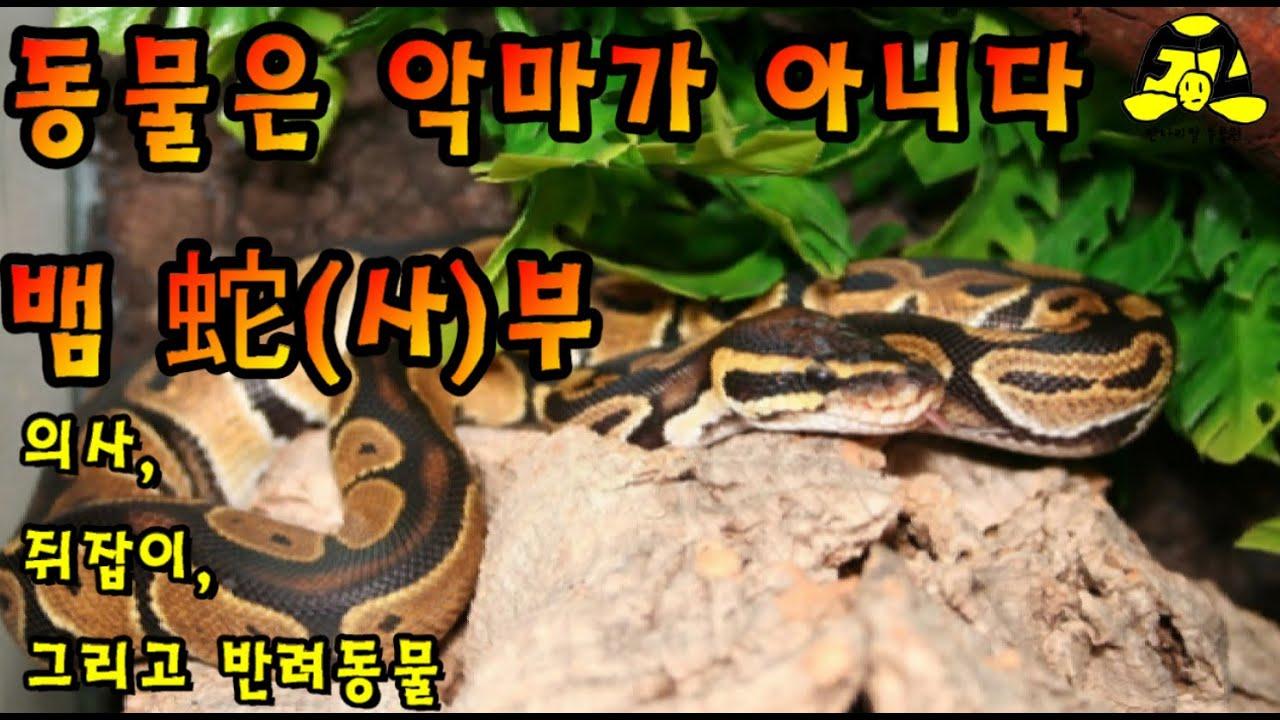 의사, 쥐잡이, 그리고 반려동물! 동물은 악마가 아니다 뱀 蛇(사, 4)부 Animals are Not Devils Snake Part 4 動物は悪魔ではない:蛇4部