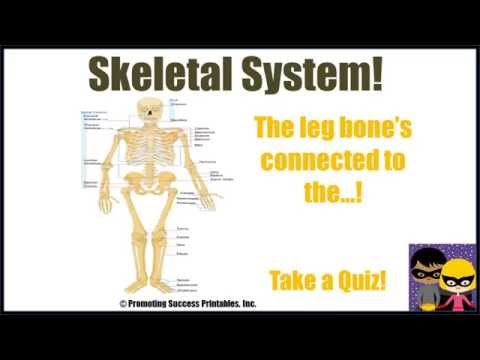 Skeletal System Human Body Skeleton Science Video for Middle Elementary School Kids