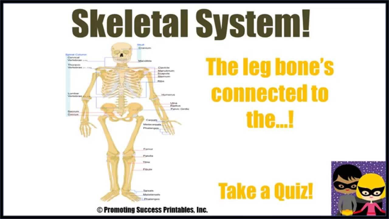 Skeletal System Human Body Skeleton Science Video for Middle ...
