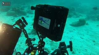 UNDERWATER VIDEO SETUP-2