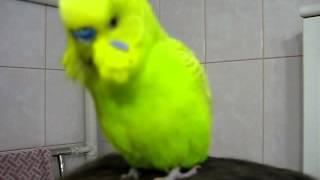 Попугай говорит без перерыва! Смешно и позитивно!