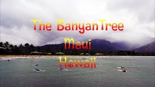 The Banyan Tree - Lahaina -  Maui - Hawaii - GoPro Video 🌴