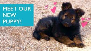 Meet our New Puppy!! Penny is an 8weekold German Shepherd puppy ✨
