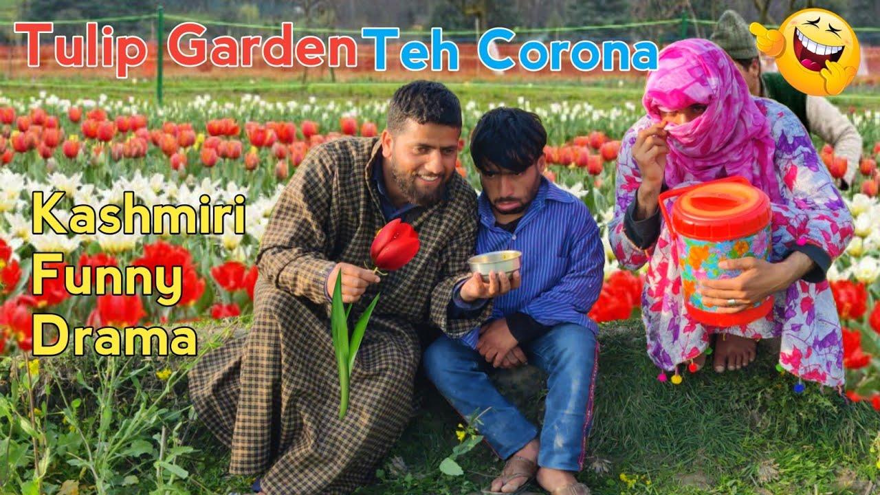 Tulip Garden Teh Corona | Kashmiri Funny Drama