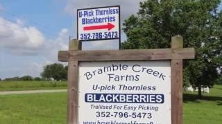 BLACKBERRIES/ BRAMBLE CREEK FARMS/U-PICK BLACKBERRIES/CHERYLS HOME COOKING/EPISODE 475