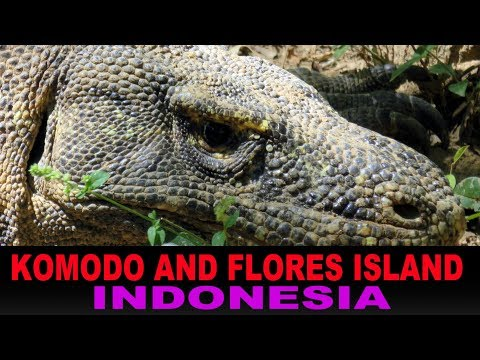 A Tourist's Guide to Komodo Island, Indonesia