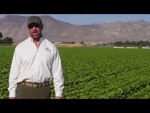 Nevada Fresh Pak: The State's Largest Organic Grower