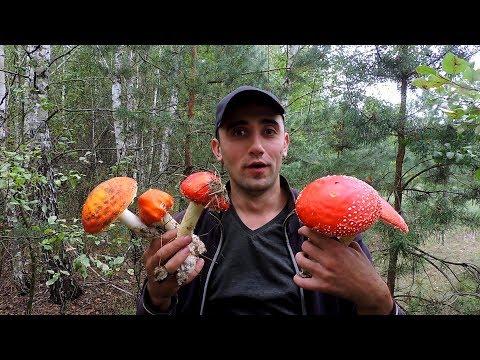 Вот это поход по грибы! Готовлю крылышки,запекаю картошку,гиганты белые