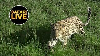 safariLIVE - Sunrise Safari - January 28, 2019
