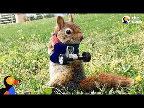 Rescue Squirrel Without Arms Makes Her Dad So Proud   The Dodo Little But Fierce
