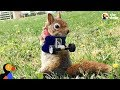 Rescue Squirrel Without Arms Makes Her Dad So Proud | The Dodo Little But Fierce