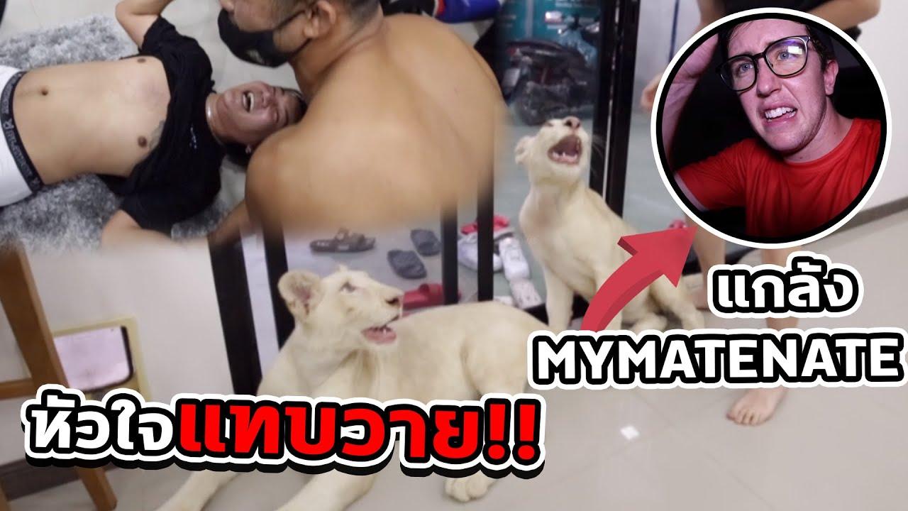 แกล้งปล่อยสิงโต 2 ตัว เข้าสตู My matenate ทำเอาใจแทบวาย !!!