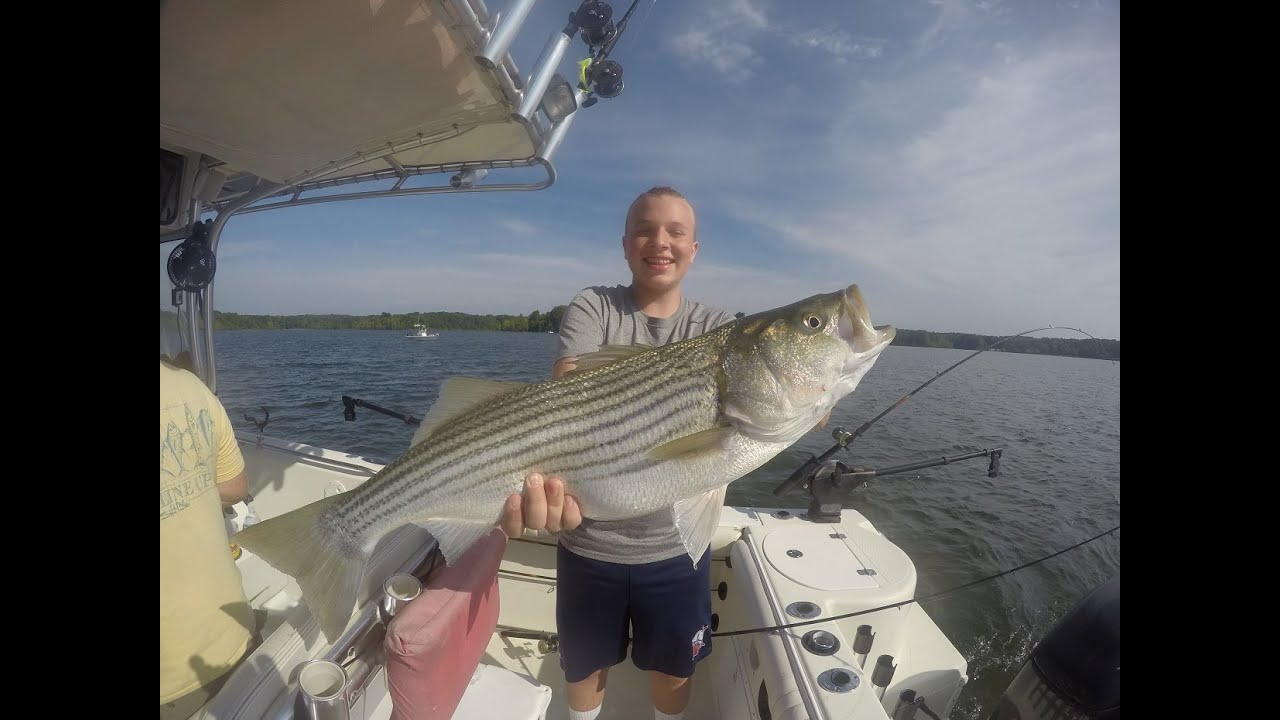 Striper fishing on kerr lake nc youtube for Lake gaston fishing report